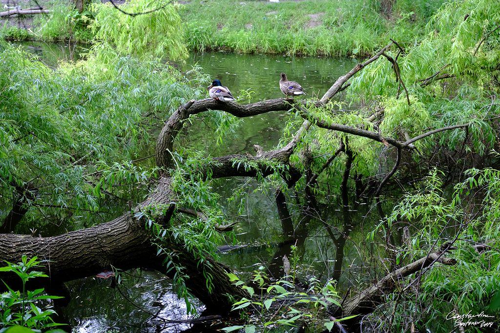 Am Teich in Kytajiw