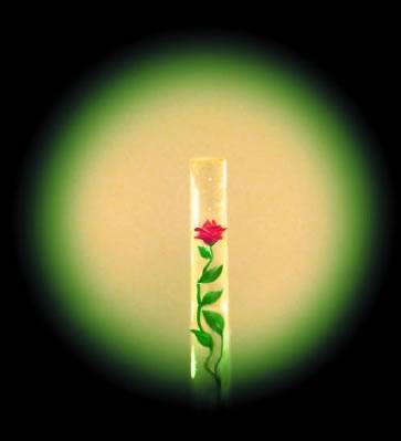 Die Rose im Härchen